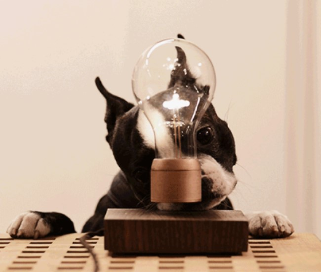 Floating Light Bulb | TheStrangeGifts | The Best Gifts and ...