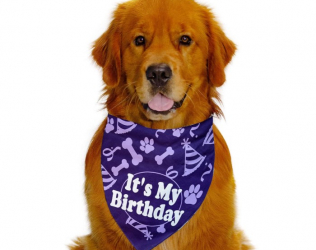 It's My Birthday Dog Ban...
