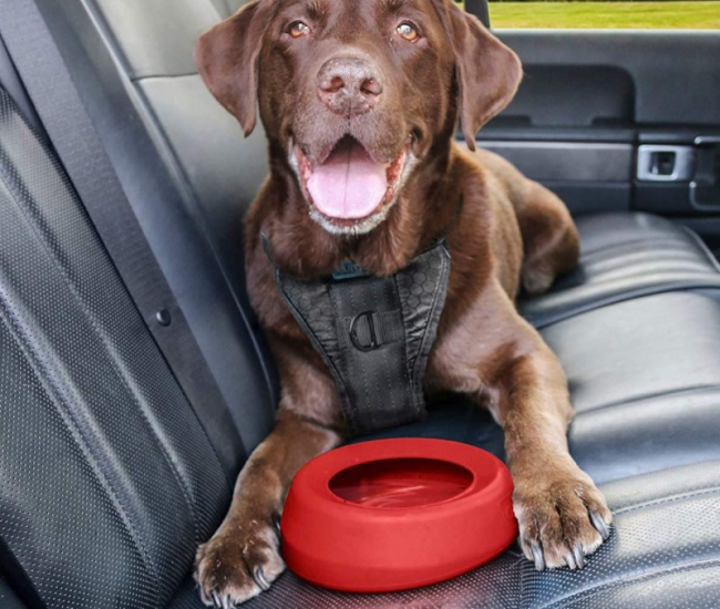 No-Spill Travel Dog Water Bowl